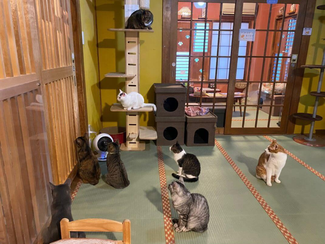 ネコリパブリック東京 お茶の水店の店内イメージ