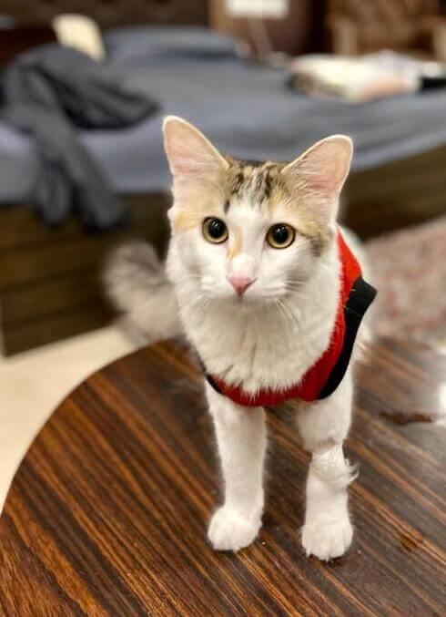 インディラ・ガンディー国際空港で行方不明・迷子になってしまった猫のNala(ナーラ)