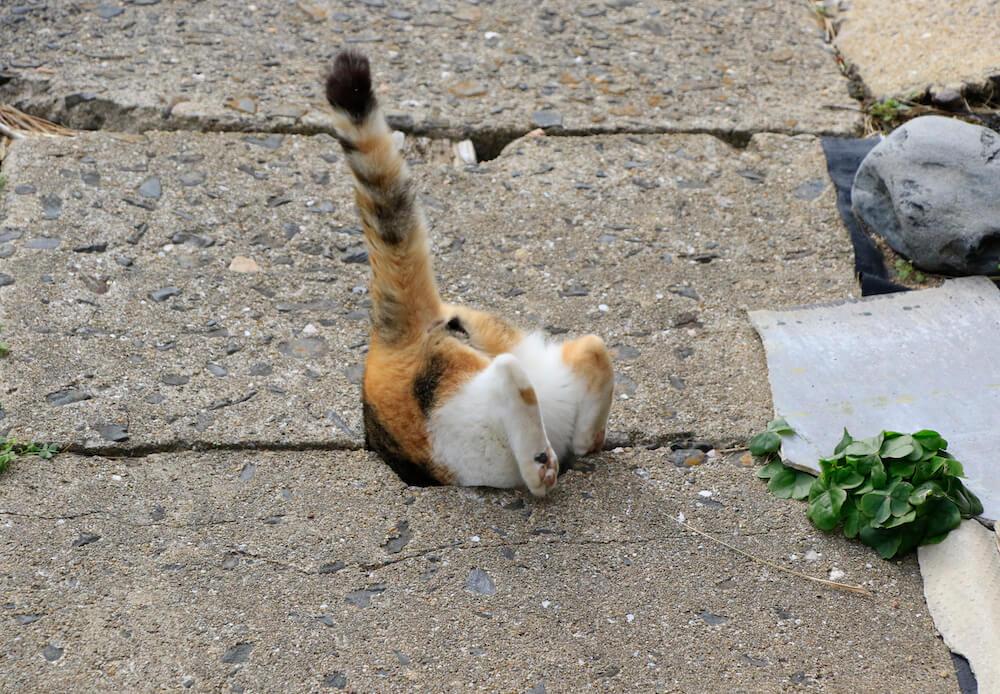 穴に潜り込もうとする猫 by 写真集「あなねこ」