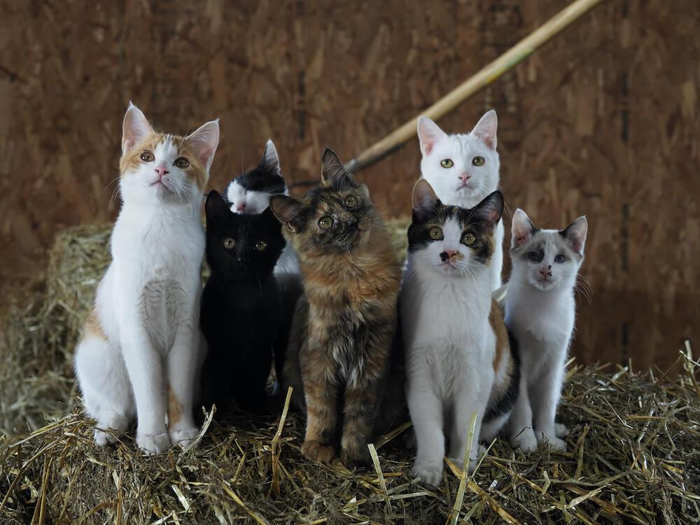 北海道の牧場で暮らす猫の家族 by 映画『劇場版 岩合光昭の世界ネコ歩き あるがままに、水と大地のネコ家族』 のワンシーン