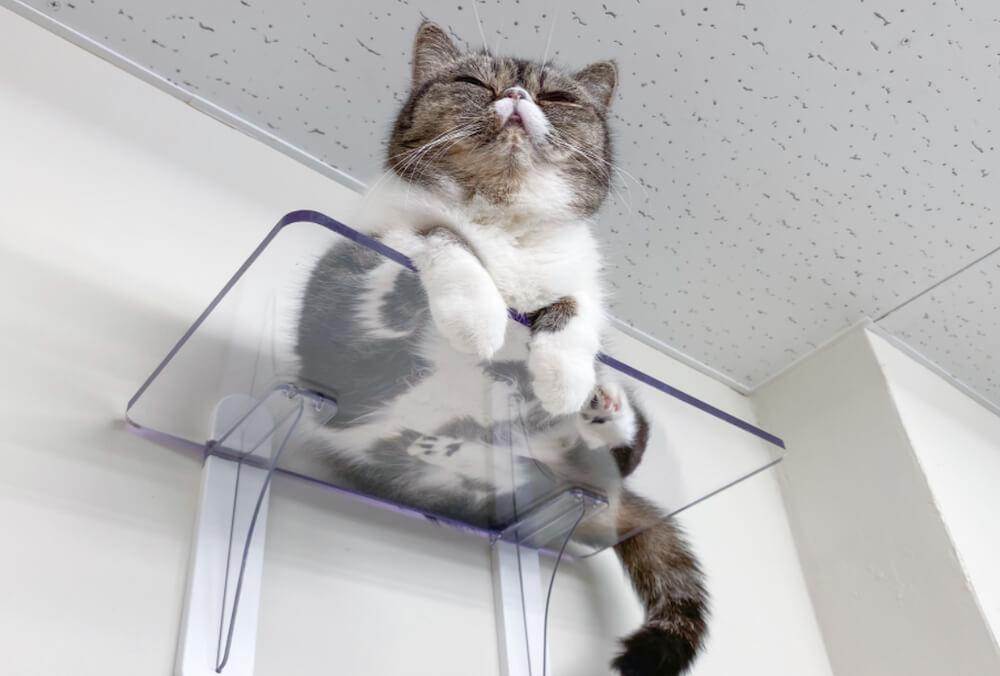 透明なキャットステップの上でくつろぐ猫 by タカラ産業