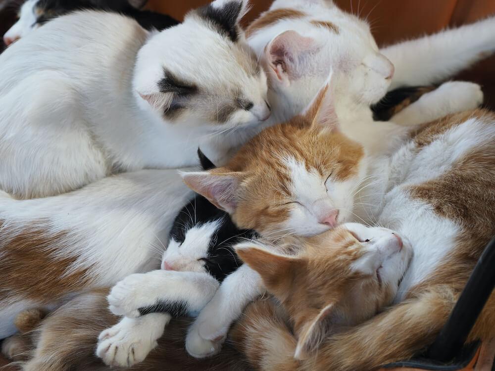 猫団子になって眠る北海道の牧場で暮らす猫たち by 映画『劇場版 岩合光昭の世界ネコ歩き あるがままに、水と大地のネコ家族』 のワンシーン