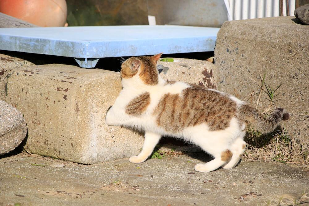 穴に手を突っ込んで様子を探る猫 by 写真集「あなねこ」