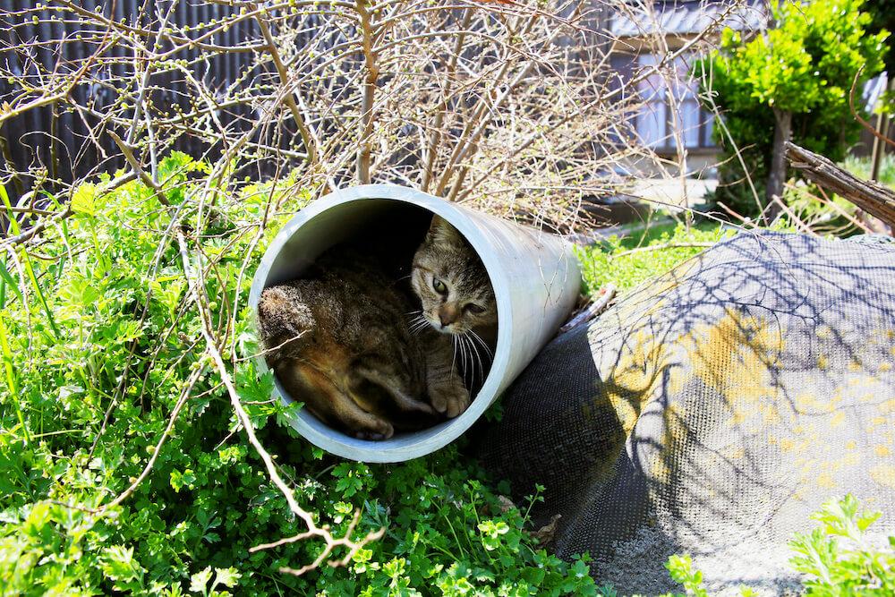 排水管の中に入って振り返る猫 by 写真集「あなねこ」