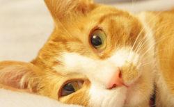 愛猫のトイレが森にニャる?食べても安心な猫砂杉にゃん!