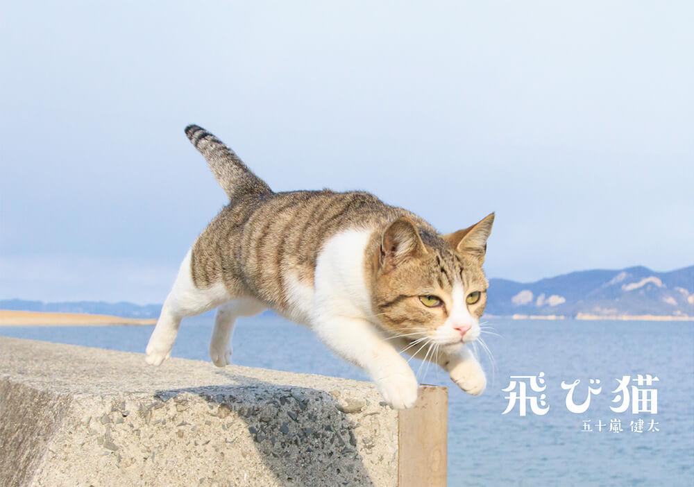 猫写真集「飛び猫」の表紙 by 五十嵐健太
