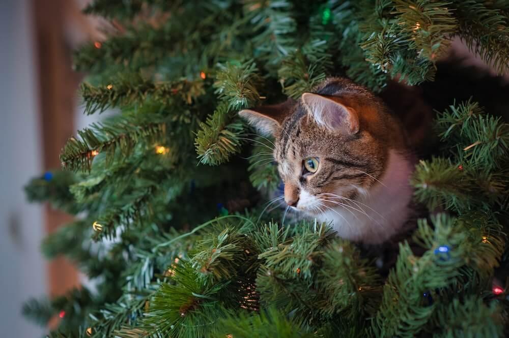 クリスマスツリーから顔を覗かせる猫のイメージ写真