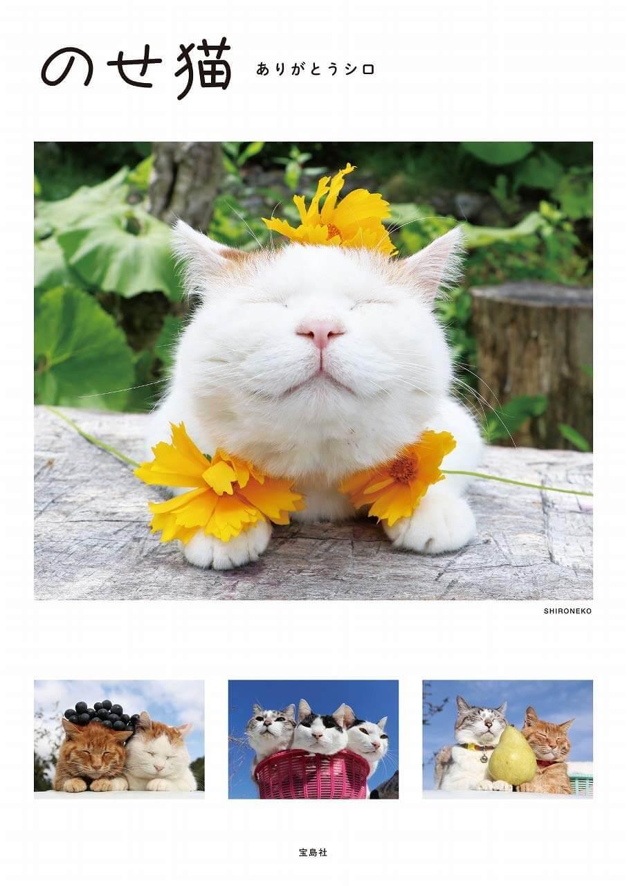 かご猫・のせ猫として人気だった猫シロの写真集「のせ猫 ありがとうシロ」表紙イメージ