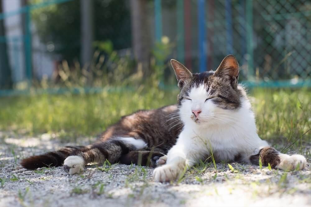 季節の移ろい感じる猫のイメージ写真