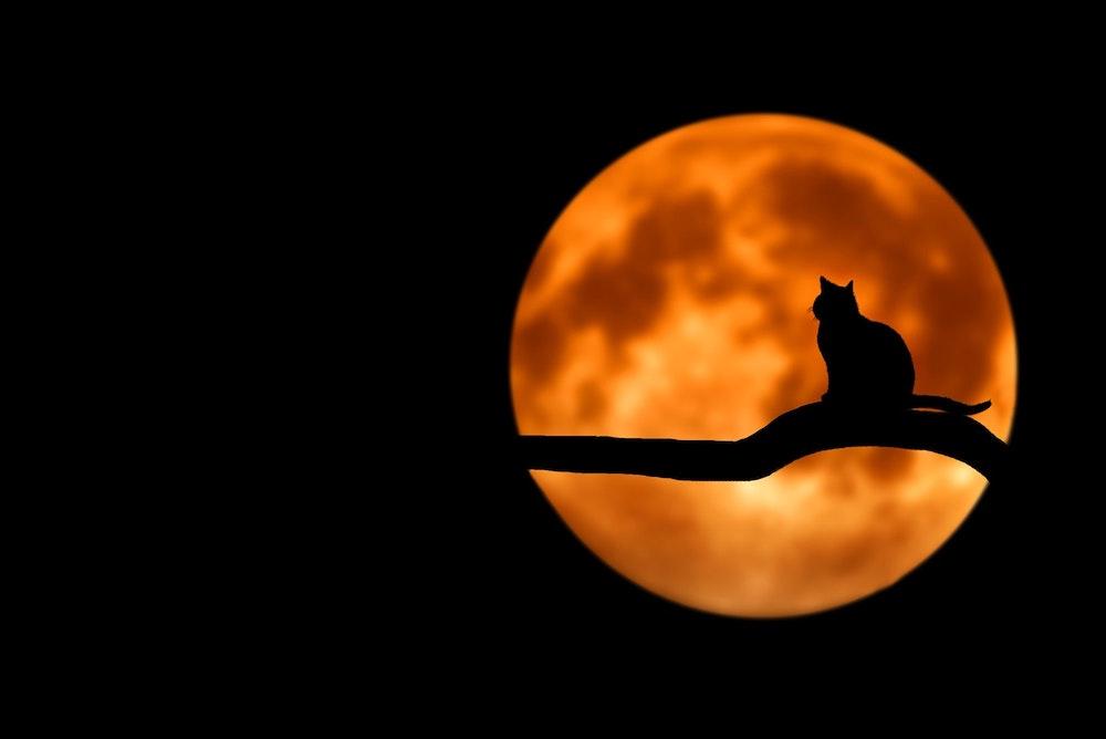 ハロウィンカラーの満月と黒猫のシルエット ハロウィンのイメージ写真