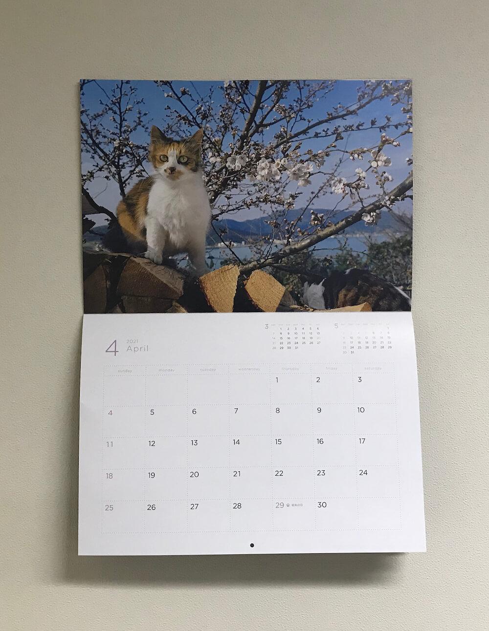 「岩合光昭 福ねこ2021 カレンダー」2021年4月カレンダーの設置イメージ