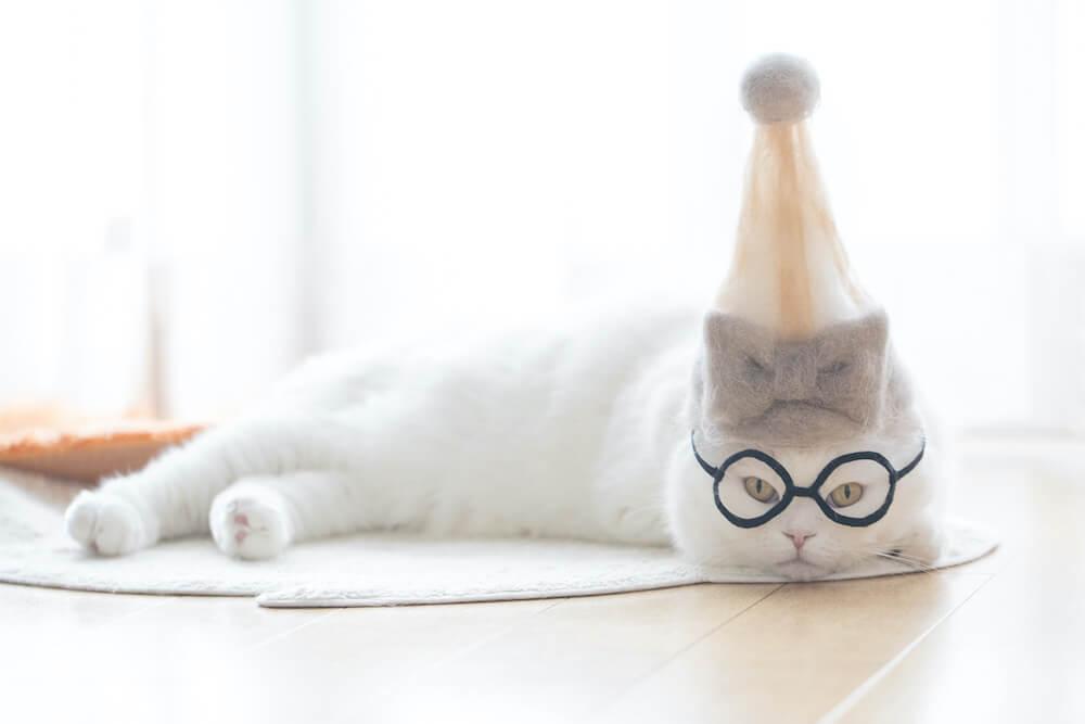 抜け毛で作った帽子をかぶる猫の写真 by rojiman
