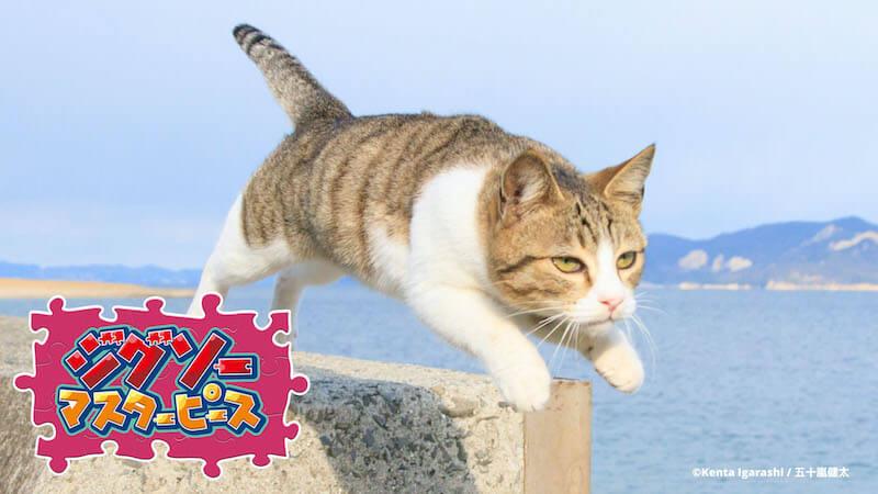 飛び猫 / 五十嵐健太のジグソーパズル