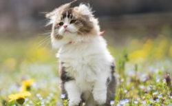 モフモフな動物に癒やされる!猫などの作品200点以上を展示する「もふあつめ展」神戸市で開催