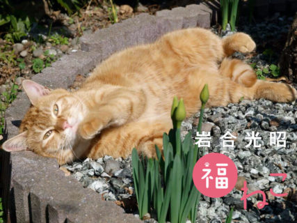 祝日には肉球マークもあるよ!猫を眺めて癒やされる「岩合光昭 福ねこ2021 カレンダー」