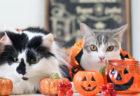 ハロウィン仕様のネコ作品も展示!42組のクリエイターが参加する「ねこ休み展」大阪で開催