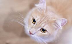 猫アレルギーだけど猫カフェに行きたい…!そんなニーズに応えるお店「CatsHouseねこや」