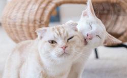 ねこ雑貨マルシェとねこ写真展で心が温まるイベント「Let's おでんParty♪」、神戸の猫カフェ「猫の屋おでん」で11月から開催