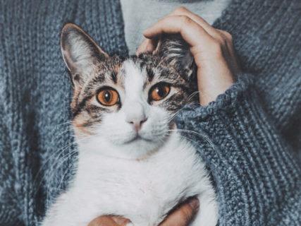 10/22はキャットリボンの日!愛猫の乳がんチェック方法も学べる啓発イベントが開催