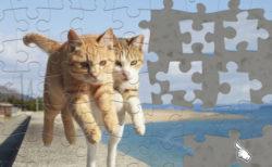らぶ駅長や飛び猫がパズルに!Nintendo Switch用のパズルゲームに人気の猫写真が追加