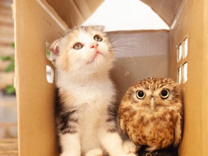 猫とフクロウの仲良しショットもあるニャ!ネコ写真家・五十嵐健太さんの写真展が金沢で開催