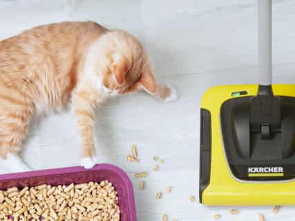 ケルヒャーが公式アンバサダーのペットを募集中!猫砂の掃除に役立つクリーナーも当たるニャ