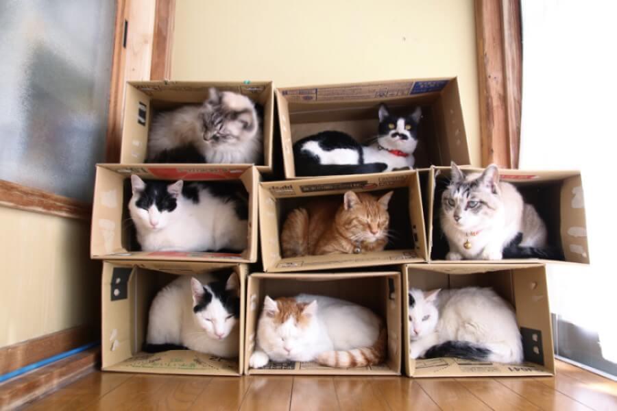 8個の箱に1匹ずつ入る8匹の猫(かご猫・のせ猫ファミリー)