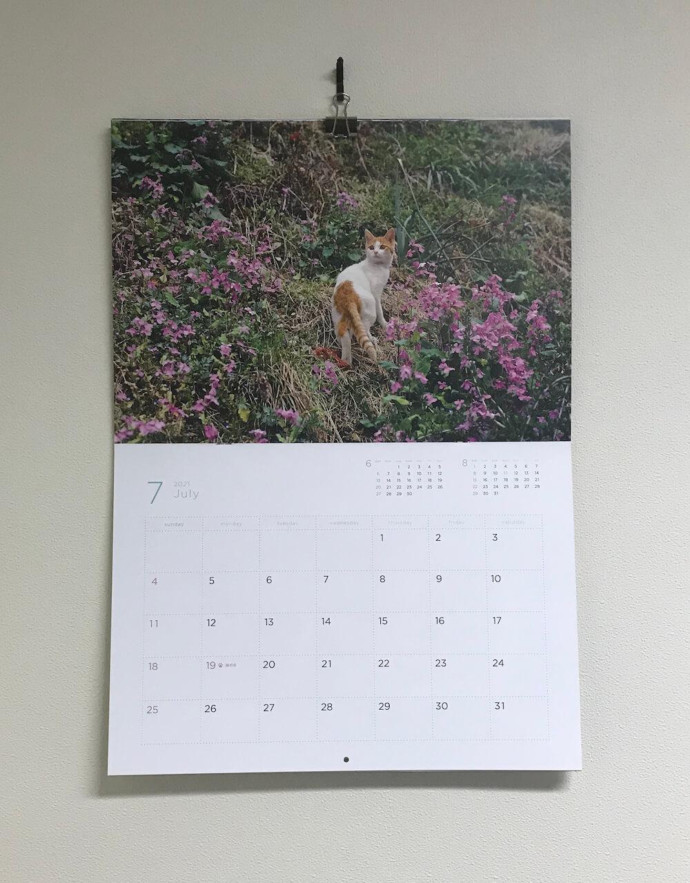 「岩合光昭 福ねこ2021 カレンダー」2021年7月のカレンダーイメージ