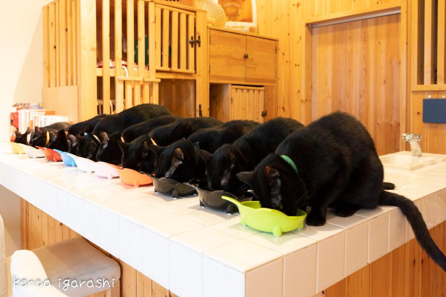黒猫(猫カフェ ねこびやか) by 五十嵐健太