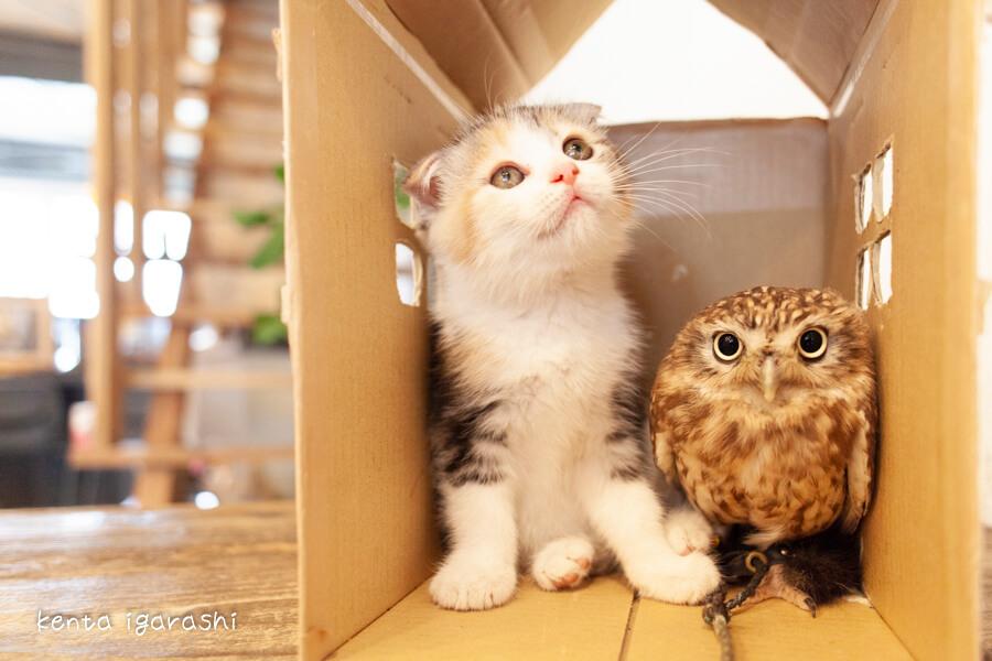 猫とふくろうの写真「フクとマリモ」 by 五十嵐健太
