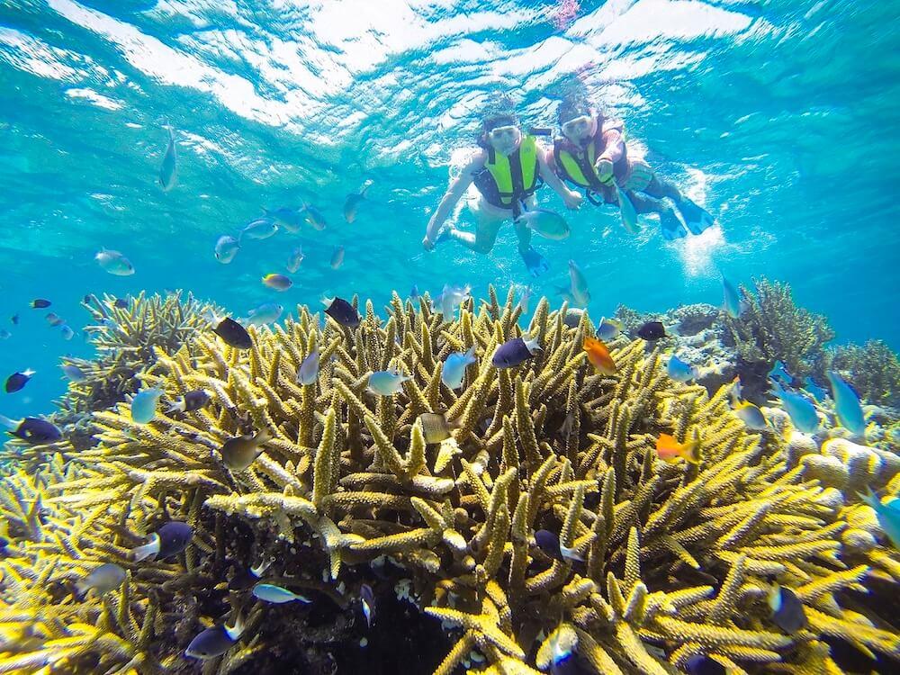 西表島の珊瑚礁でシュノーケリングを楽しむ様子
