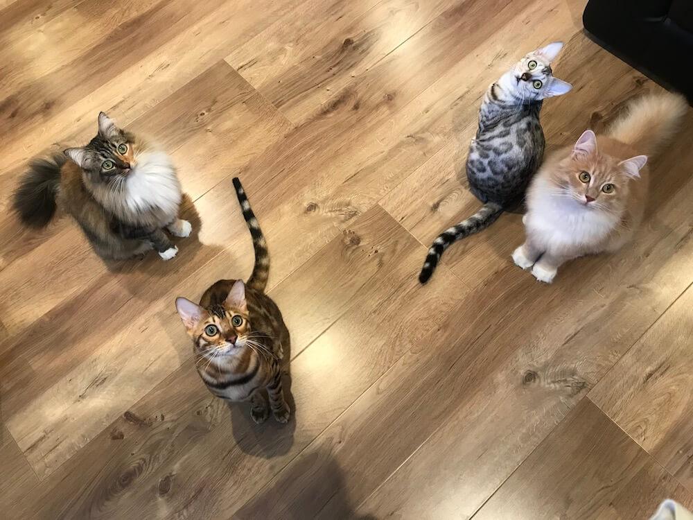 猫アレルギーの人でも猫と触れ合える猫カフェ「Cats House ねこや」の店内イメージ
