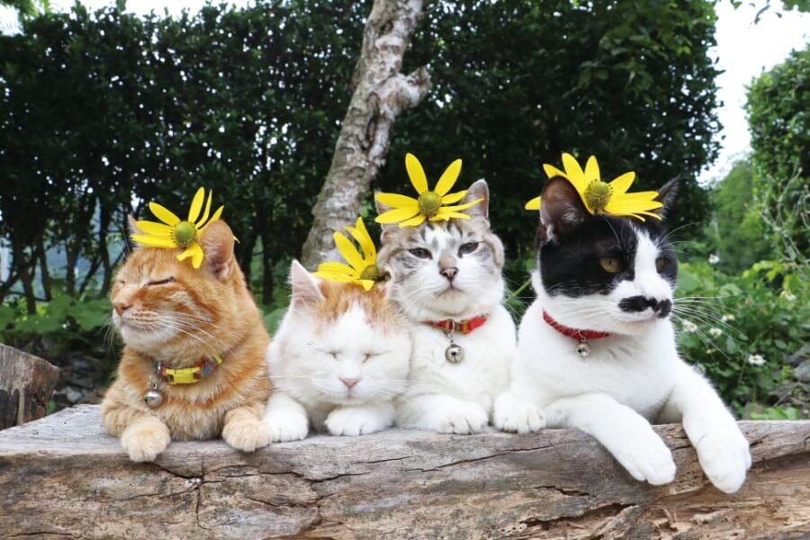 頭に黄色い花を乗せた4匹の「のせ猫」を撮影した写真