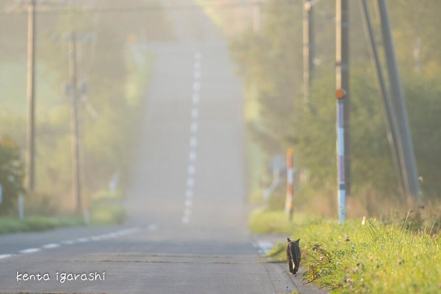 人気のない道路脇を歩く猫の写真 by 五十嵐健太