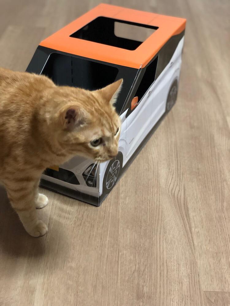 ねこ用軽自動車「おうち用にゃっさんデイズ」の様子を見に来た茶トラ猫