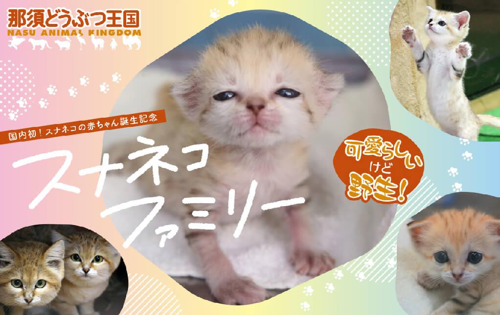 スナネコの赤ちゃん誕生記念 オリジナルフレーム切手販売開始イメージビジュアル
