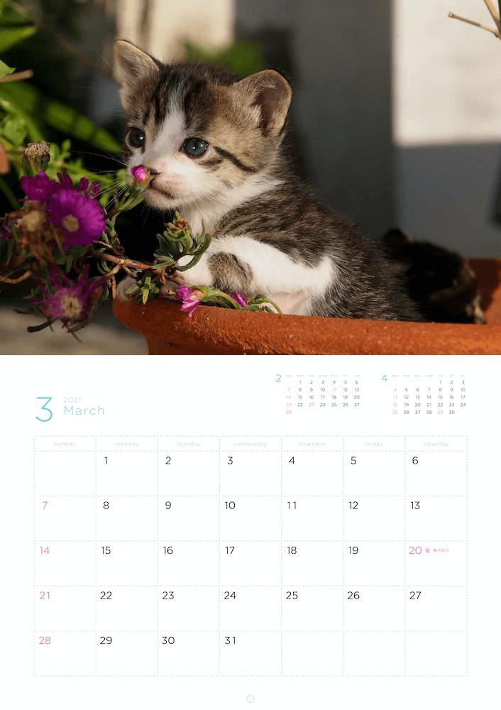 「岩合光昭 福ねこ2021 カレンダー」2021年3月のカレンダーイメージ
