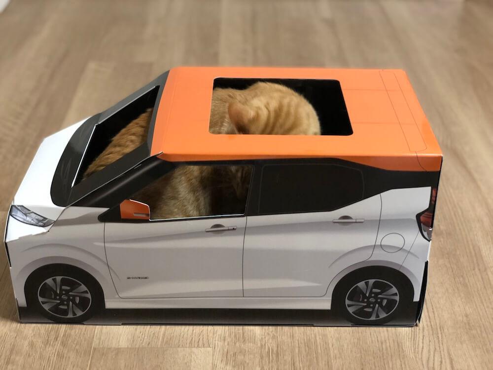 ねこ用軽自動車「おうち用にゃっさんデイズ」の中で座り込もうとする茶トラ猫