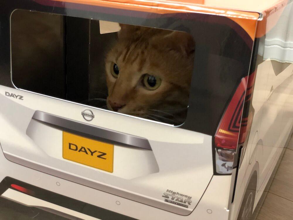 ねこ用軽自動車「おうち用にゃっさんデイズ」のリアガラスから外を眺める茶トラ猫