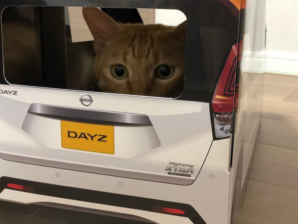 ねこ用軽自動車「おうち用にゃっさんデイズ」に乗って写真撮影をする茶トラ猫