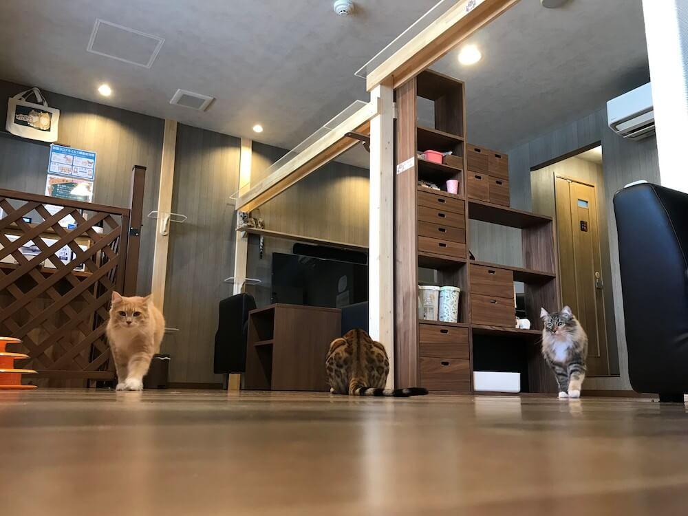 猫アレルギーが出にくい猫カフェ「Cats House ねこや」の店内イメージ