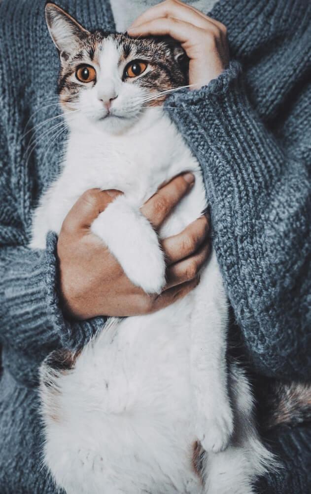 飼い主さんに抱きかかえられる猫の写真