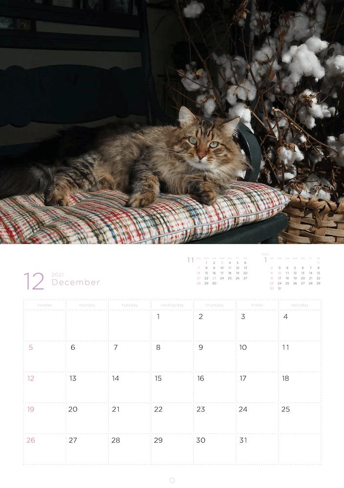 「岩合光昭 福ねこ2021 カレンダー」2021年12月のカレンダーイメージ