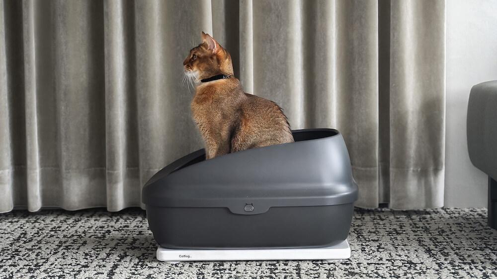 Catlog Board(キャトログボード)で猫の体重や尿量を計測しているイメージ