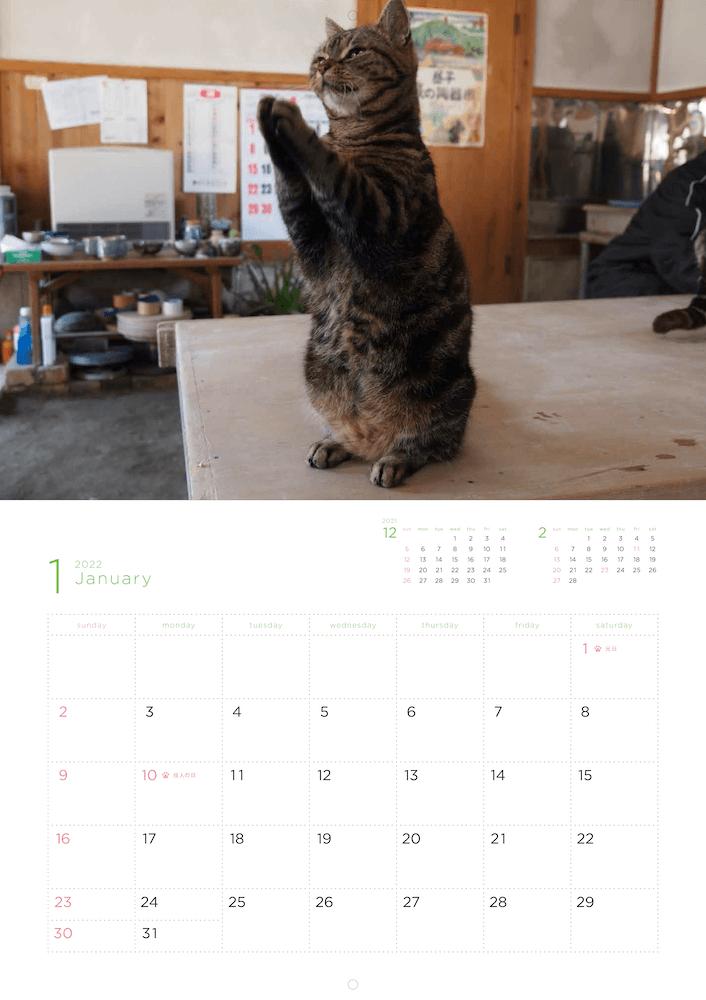 「岩合光昭 福ねこ2021 カレンダー」2022年1月のカレンダーイメージ