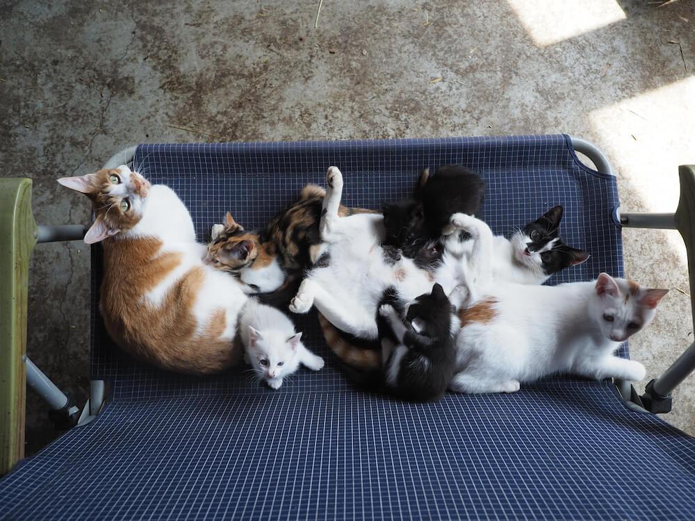 牧場で家族で暖を取るの家族写真 by 映画「劇場版 岩合光昭の世界ネコ歩き あるがままに、水と大地のネコ家族」
