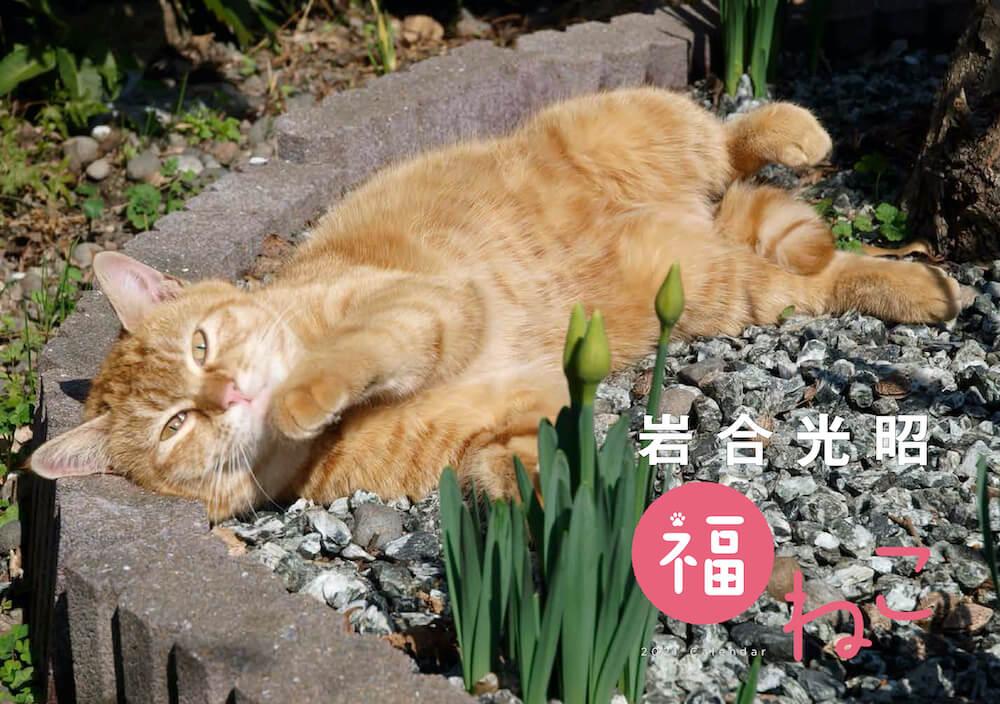 「岩合光昭 福ねこ2021 カレンダー」の表紙イメージ