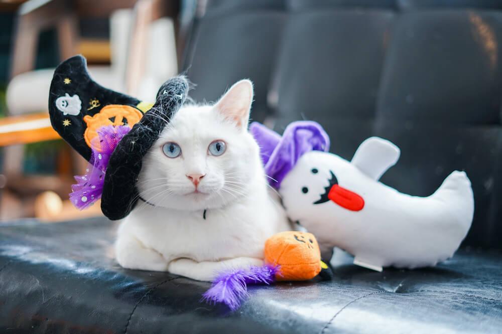 ハロウィン風の魔女に仮装した猫の写真 by yuiii