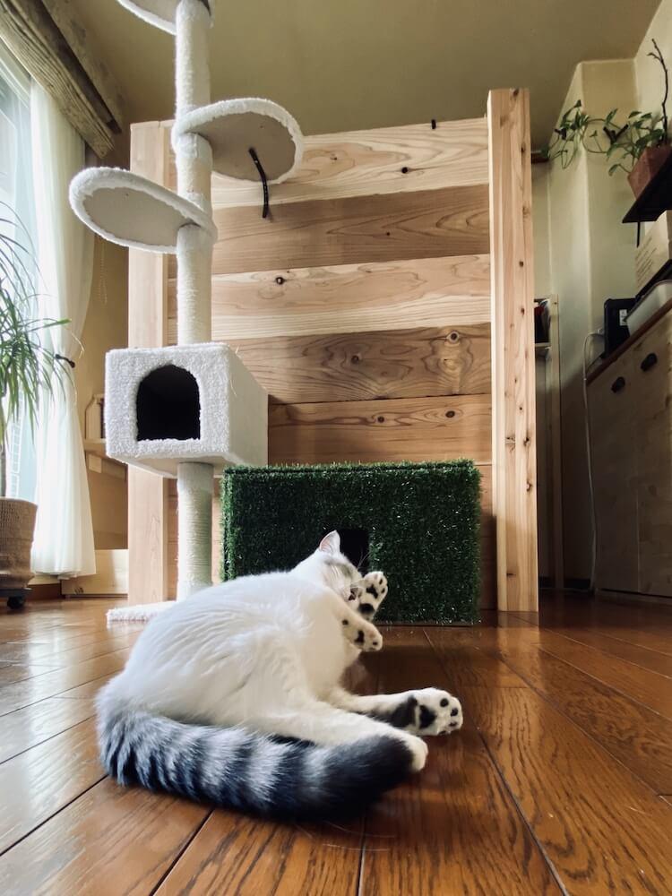 お部屋のスペースを占拠する猫のイメージ写真