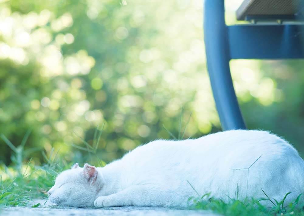外で気持ちよさそうに眠る白い野良猫 by 阪井壱成